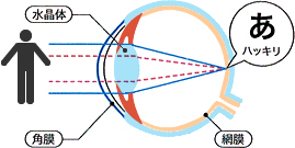 眼の構造(水晶体・角膜・網膜)